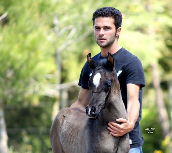 Potro Equus Arabians